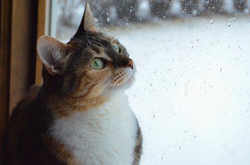 Cat, Kitten, Animal, Pet, Window, Glass, Rain