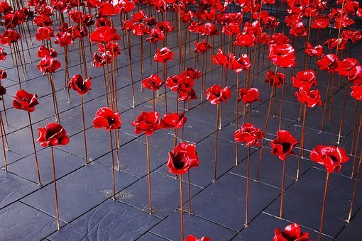 Poppies, War, Remembrance, Red, Poppy, Flower, Day