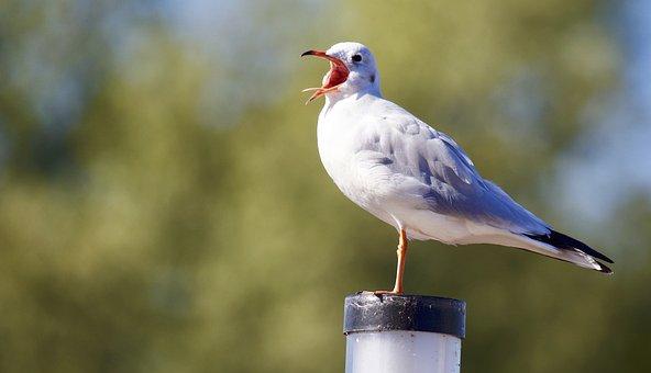 Animal, Bird, Seagull, White, Eye, Trees, Sky, Head