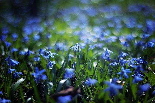 Blue, Petal, Flower, Bokeh, Plant, Outdoor, Nature