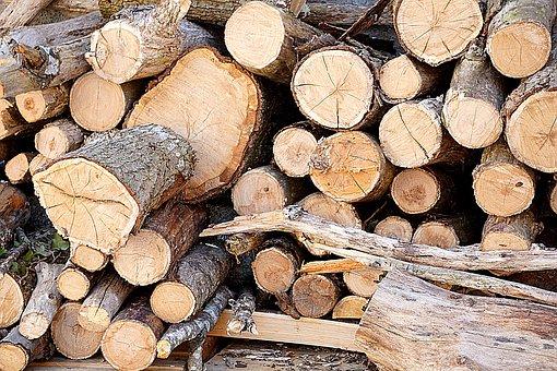 Plants, Tree, Branch, Trunk, Cut, Fall, Stock, Pile