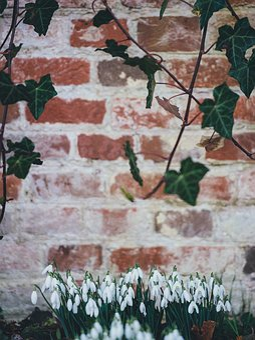 Plants, Flower, Tulips, Garden, Leaves, Soil, Petal