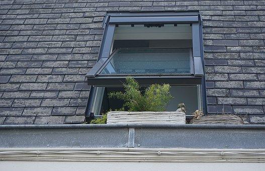 Window, Glass, Plants, Roof, Bricks, Concrete, House
