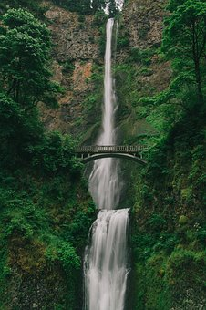 Nature, Trees, Woods, Forest, Green, Falls
