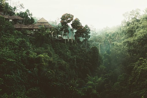 Trees, House, Nature, View, Green, Forest, Vacation