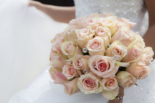 Flower, White, Petal, Bloom, Garden, Plant, Nature