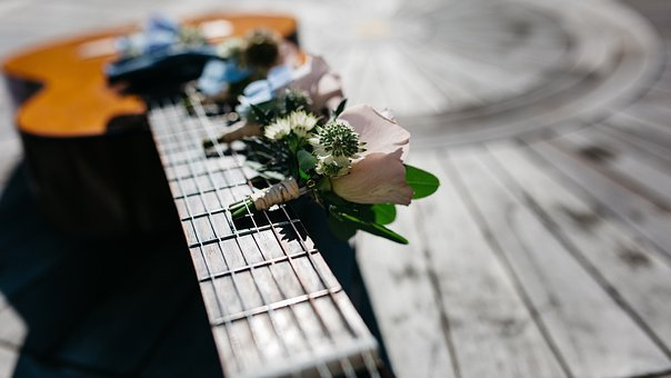 Flower, Pink, Petal, Bloom, Plant, Autumn, Fall, Guitar
