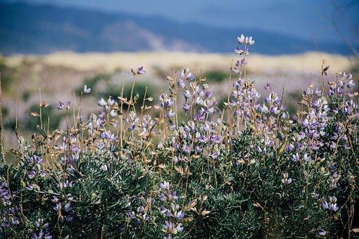 Bokeh, Flowers, Mountain, Grass, Plants, Blur, Sky