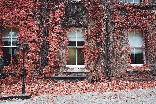House, Windows, Glass, Leaves, Street, Fall, Autumn