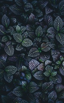 Leaves, Nature, Plant, Green, Veins, Dark