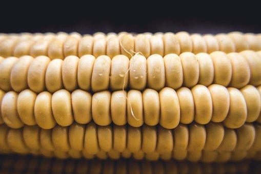 Corn, Cob, Sweet, Fresh, Sweetcorn, Raw, Plant, Eat