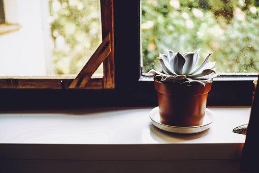 Plant, Cactus, Decorative, Green, Flower, Decoration