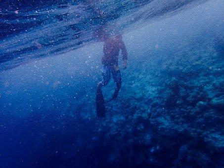 Water, Underwater, Blue, Corals, Diving, People, Man