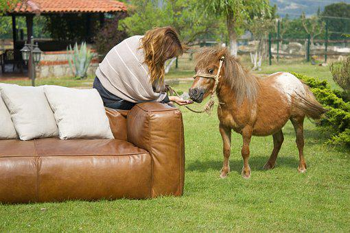 Horse, Armchair, Women's, Furniture, Animal