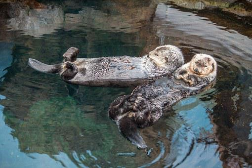 Relaxed, Lisbon, Aquarium, Oceanarium, Otter