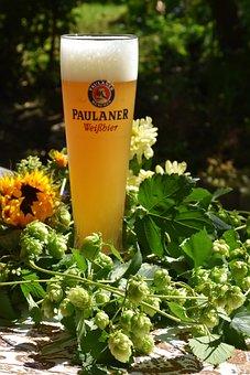 Hops, Hop Shoots, Beer, Wheat Beer, Yeast, Beer Glass