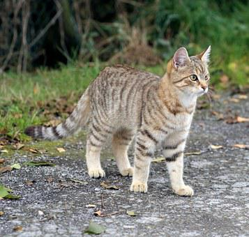 Cat, Young Animal, Attention, Domestic Cat, Felidae