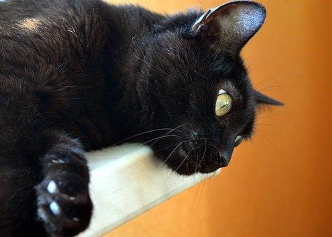 Cat, Black Cat, Pets, Pet, Cat Eyes, Cat's Eye