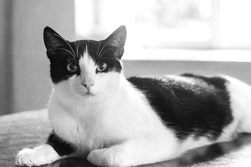 Cat, Kitten, Domestic Cat, Pet, It Lies, Curiosity