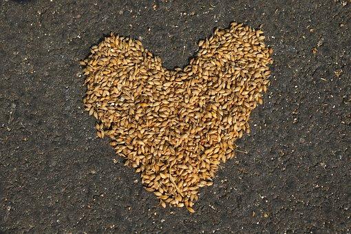 Cereals, Harvest, Agriculture, Nature, Field Crops