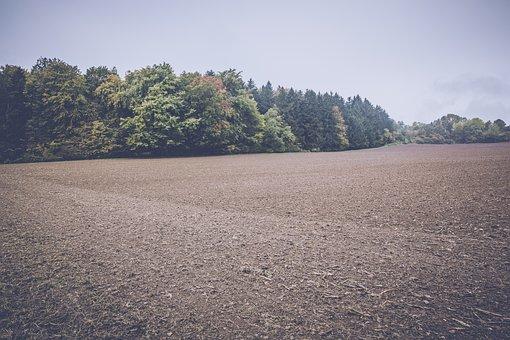 Field, Arable, Landscape, Agriculture, Fields, Nature