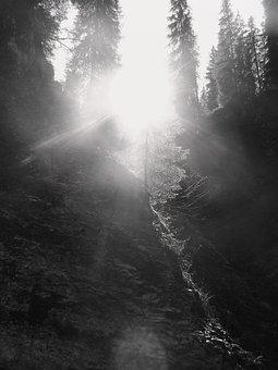Light, Pine, Forest, Nature, Bihar Mountains