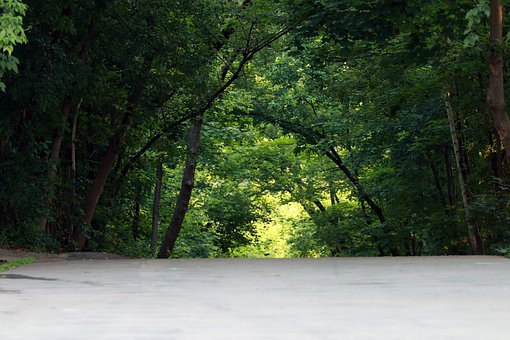 Green, Forest, Canopy, Landscape, Nature, Environment