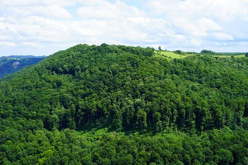 Sheep Hump, Forests, Forest, Swabian Alb