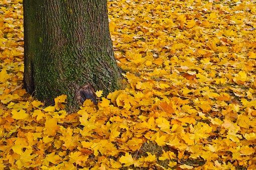 Autumn, Gold, Golden Autumn, Leaves, Golden October