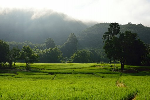 Rice Terrace, Rice, Mountains, Green