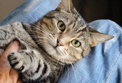 Cat, Supine Position, Crawl, Hand, Stroke, Peritoneum