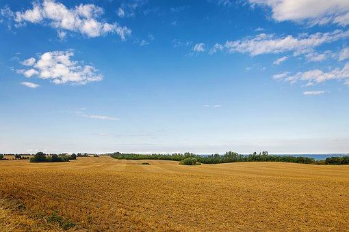 Field, Grain, Horizon, Clouds, Nature, Landscape