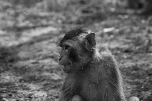 Monkey, Majomféle, Mammal, Sorry, Sadness, A Closed