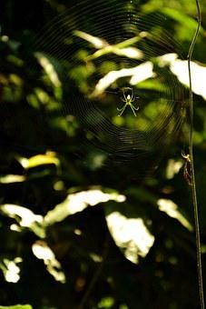Reel, Spider, Insect, Views, Photography, Green