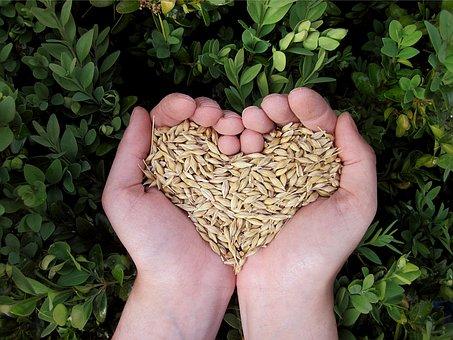 Heart, Hands, Food, Grains, Cereals, Nature, Eat, Plant