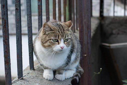 Cat, Lies, Sorrow, Sad, Sadly, Grille, Street