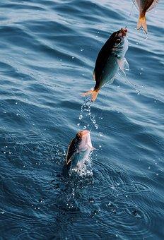 Fish, Catch, Hook, Lake, Water, Ocean, River, Sea
