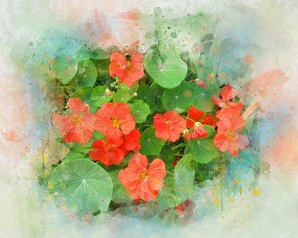 Nasturtium, Flower, Watercolor, Summer, Plant, Orange