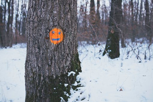 Trees, Orange, Face, Drawing, Snow, Forest, Woods