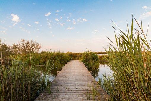 Web, Nature, Camargue, Water, Reed, Boardwalk, Bridge