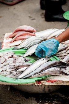 Fish, Seafood, Squid, Wet, Market