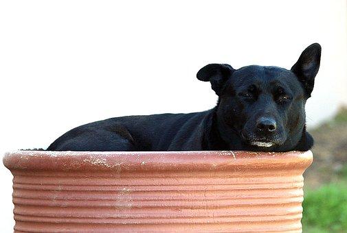 Dog, Bumentopf, Pitbull, Rest, Concerns, Hide, Relax