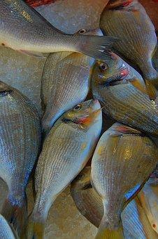 Fish, Sea Fish, Fish Market, Tenge Fruits Of, Sea