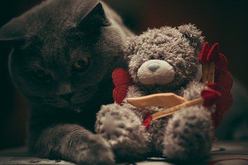 Black, Cat, Pet, Animal, Stuff, Toy