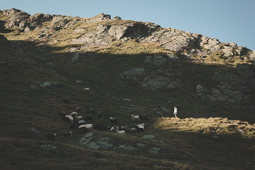 Mountain, Hill, Valley, Highland, Sheep, Animal, Herd