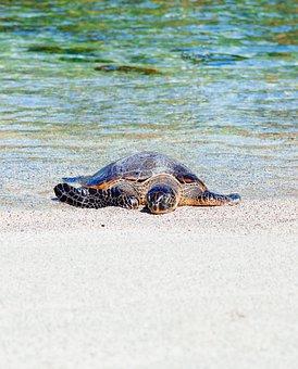 Sea, Water, Turtle, White, Sand, Beach, Shore, Coast