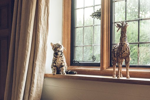 House, Indoor, Window, Glass, Frame, Curtain, Cat, Pet