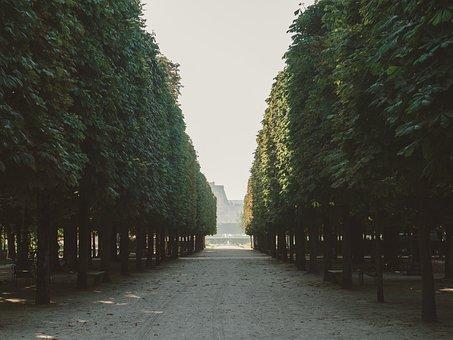 Tree, Plaza, Street, Park, Nature, View