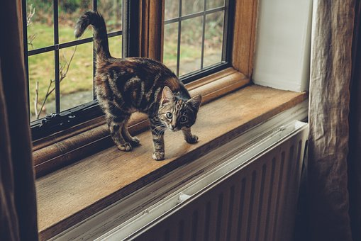 Window, Glass, Frame, Cat, Pet, Animal