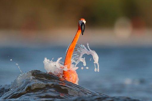 Sea, Blue, Water, Long, Neck, Orange, Bird, Animal